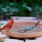 bird bath heater